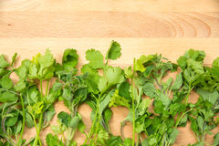 Kitchen Herbs Royalty Free Stock Images