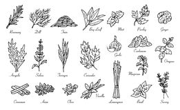 Kitchen herbs and spices, vector doodle sketch Royalty Free Stock Photo