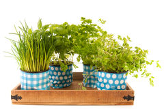 Kitchen herbs on tray Royalty Free Stock Images