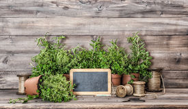 Kitchen herbs with vintage home decorations. Food ingredients Royalty Free Stock Photo