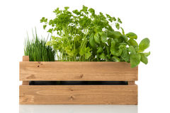 Kitchen herbs in wooden crate Royalty Free Stock Photo