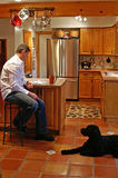 Kitchen Island. A kitchen island is a perfect place to catch up on some reading over a cup of coffee with man's best friend Royalty Free Stock Photos
