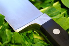 Kitchen Knife. Resting on chopped cabbage stock photography