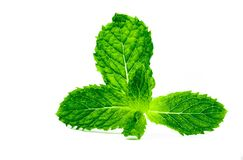 Kitchen mint leaf isolated on white background. Green peppermint natural source of menthol oil. Thai herb for food garnish. Herb f. Or anti-flatulence and make Royalty Free Stock Images
