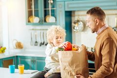 Pleasant curly boy helping his father. In the kitchen. Pleasant curly nice boy sitting near his bag and taking pepper out of the bad while helping his father royalty free stock photos