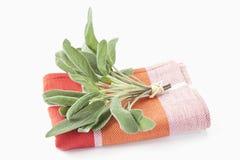Kitchen sage (salvia officinalis) Royalty Free Stock Image
