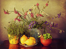 Kitchen still life, herbs, lemons and wild spring flowers, grunge texture added. Arrangement of spring wild flowers on the kitchen table with lemons, thymus pot royalty free stock photography
