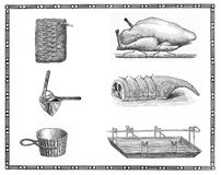 Kitchen tools and roast meat preparation:lamb, chicken. Collage of antique engravings of kitchen cooking tool and roast meat Royalty Free Stock Photo