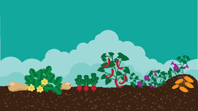 Kitchen vegetable garden flat design Royalty Free Stock Photos