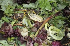 Kitchen waste Royalty Free Stock Photography