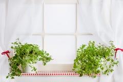 Kitchen window and herbs on the windowsill. Background stock image