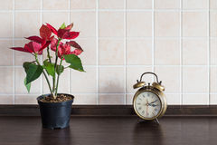 Kitchen worktop background. Plant with clock Stock Photography