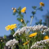 Kitchengarden flowers Stock Photo