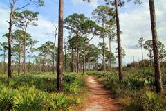 Kitching Creek Hiking Trail royalty free stock images