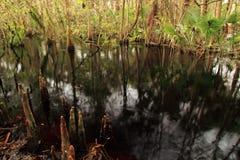 Kitching Creek Royalty Free Stock Image