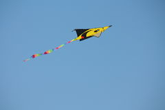 Kite. Stock Images