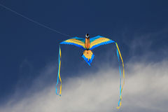 The kite as a Blue Bird Royalty Free Stock Images