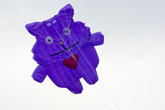Kite cat Stock Images