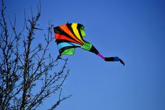 Kite. Colorful kite blowing in the wind while stuck in a tree Stock Photo
