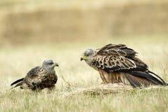 Kite Couple Stock Photo