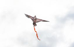 A kite at the dark sky Royalty Free Stock Photography