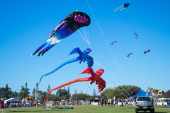 Kite Festival. Several colorful and different kinds of kites flying and on display during the 2015 Kite Fest held in Redcliffe in Australia Royalty Free Stock Photos