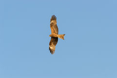 Kite. In flight on a blue sky background Royalty Free Stock Photos