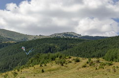 Kite fly high over panorama of glade and green forest. In Vitosha mountain, Bulgaria royalty free stock photo
