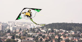Kite flying - Bald eagle Royalty Free Stock Image