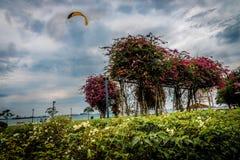 Kite Flying in Bougainvillea Garden At Beach Royalty Free Stock Photos