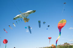 Kite flying day Royalty Free Stock Photography