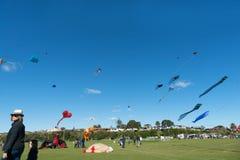 Kite flying day Royalty Free Stock Image