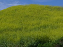 Kite Hill wild flowers Aliso Viejo CA USA Royalty Free Stock Image