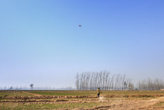 Kite runner. In the early spring wheat field Royalty Free Stock Photography