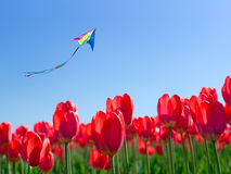 Kite soars into the sky. Over the flowers Stock Image