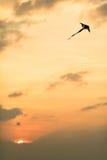 Kite at sunset. Sun, sunset sky Royalty Free Stock Image