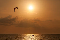 Kite surfer jumping from the water Royalty Free Stock Photos