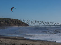 Kite surfing with birds stock photography
