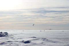 Kite surfing in the winter. On the Gulf of Finland in Russia Stock Images