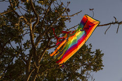 Kite tangled on tree branches Stock Images