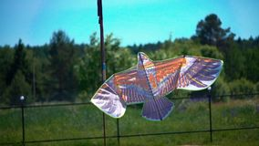 A kite in the form of a bird flies in the sky stock video