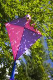 Kite in tree Stock Photography