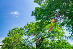 Kite in a tree Stock Images