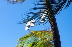 Kiteboarding se cierra para arriba detrás de árboles y del cielo azul Fotos de archivo