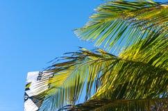 Kiteboarding se cierra para arriba detrás de árboles y del cielo azul Foto de archivo libre de regalías