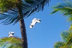 Kiteboarding se cierra para arriba detrás de árboles y del cielo azul Imágenes de archivo libres de regalías