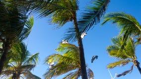 Kiteboarding se cierra para arriba detrás de árboles y del cielo azul Imagen de archivo