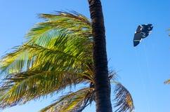 Kiteboarding se cierra para arriba detrás de árboles y del cielo azul Foto de archivo