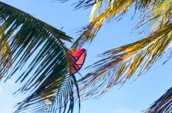 Kiteboarding se cierra para arriba detrás de árboles y del cielo azul Fotografía de archivo