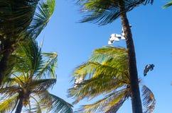 Kiteboarding se cierra para arriba detrás de árboles y del cielo azul Fotografía de archivo libre de regalías
